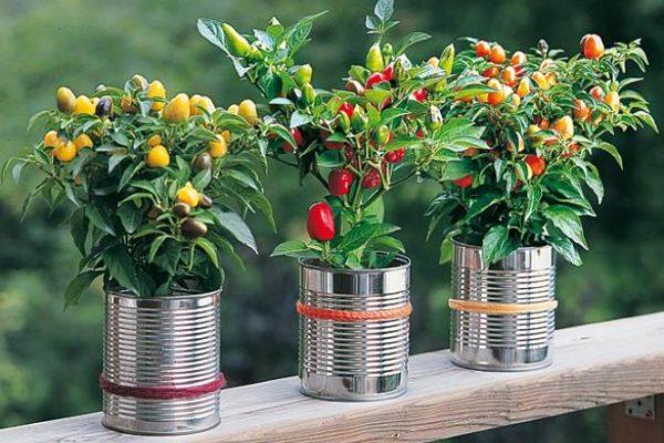 Recycler les boîtes de conserves en pot de fleurs et pot pour les plantes