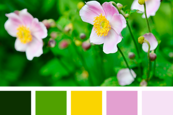 Color Palette 4019 - associer le rose en décoration