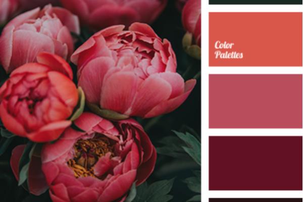 Color Palette 4098- associer le rose en décoration